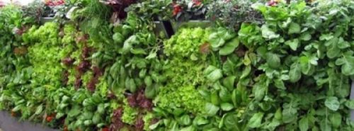 Gardening Ideas for Turning a Small Space into a BIG HARVEST-Is acreage still but a dream for you? Consider Vertical Gardening! Vertical gardening is nothing more than using vertical space to grow vegetables (or herbs, or flowers, even root crops), often using containers that hang on a sunny wall. flowers, even root crops), often using containers that hang on a sunny wall. Shiro seeks out some ingenious natural uses... of Nature's spaces indeed. Lots of varied approaches it seems,.. to getting a GARDEN... all green.