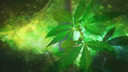 Hemp. Going Green is not all... a good thing. The joys of using Nature's Herbs... is oft Controlled. Not by you... btw. Laws and Society... has their say... and Ways it seems indeed. Ups n Downs of a Plant Legend. Growing... and going such Green entails Law Enforcement... to enforce it's Ideals. Go Green... get the Blues. Hemp. Cannabis. Herein. Shiro style. Our World Legends. Music... too.