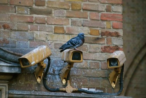 A Pigeon Sits Atop One Of A Row Of Cameras On A Building Wall.