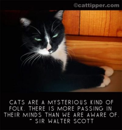 photocredit/thanks:cattipperCATS ARE A MYSTERIOUS KIND OF FOLK. THERE IS MORE PASSING IN THEIR MINDS THAN WE ARE AWARE OF : SIR WALTER SCOTT