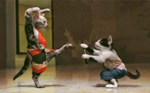 Featured Image Of A Fantasy Image Of Two Uniformed Cats Practicing Martial Arts.