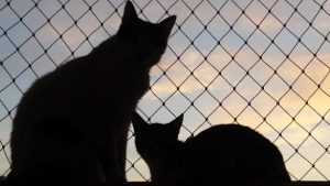 OUR CATS. DOMINO AND TOPAZ IT SEEMS INDEED.