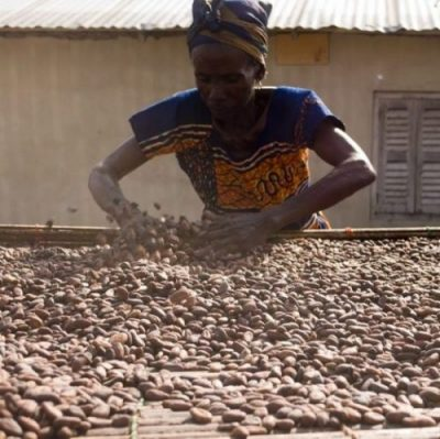 CHOCOLATE's COCOA BEANS... LEVELED OUT SWEETLY... FOR DRYING INDEED.