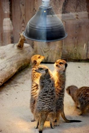 NOW... ACC. TO THE DICT.,... IF THESE GUYS PLAN SOME MEERKAT MISCHIEF...AND... TELL THE REST OF THE MEERKATS NOTHING ABOUT THE MEETING of MISFIT MISCHIEF MAKERS AND SO FORTH... THATS A CONSPIRACY... OF MAMMOTH MEERKAT MISCHIEF MISINFORMATION INDEED. SIMPLE... sorry Simon... and thanks MEERKATS.