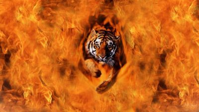...1962...YEAR OF THE TIGER...SHIRO's BIRTH YEAR... AND This YEAR... WE SET THIS TOWN ON FIRE... CLICK TO SEE AND FEEL Our World Legends BURN INDEED.