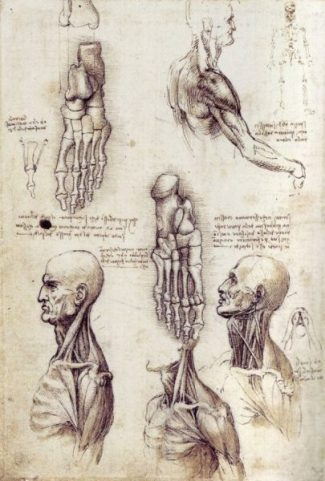 Revealing Anatomy... da Vinci Style. photocredit/thanks:drawingacademy