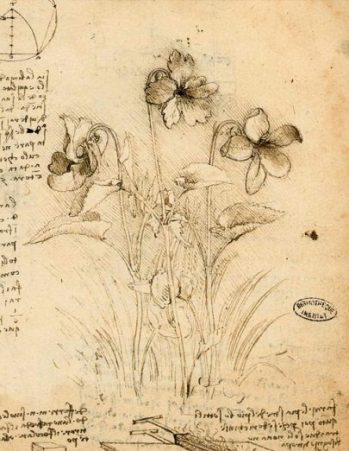 The Ways of Nature... Leonardo style that is. photocredit/thanks:discoveringdavinci