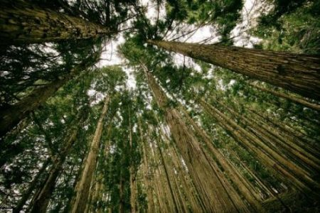Image In A Forest Looking Up.