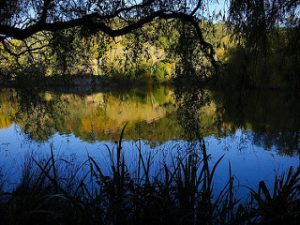 Featured Topic Area Image Creek Forest Scene.