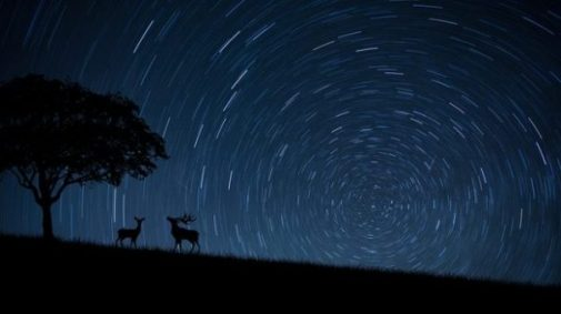 Silhouetted Deer, Moose Stand Under A Tree. Star Tracks Fill The Sky.