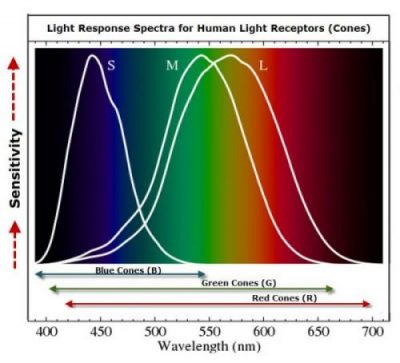 Image Of A Chart Showing The Eyes Light Receptor Bandwidth.