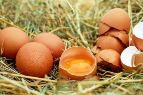Featured Topic Image 3 Uncracked Eggs, A Small Pile Of Empty Eggshells Surround The Central One Highlighting It's Yolk. On A Straw Bed.