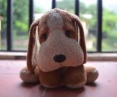 Featured Topic A Brown And White Toy Dog Sits On A Window Ledge During Daylight Times.