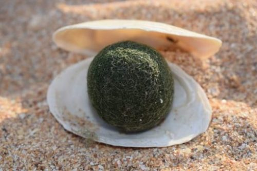Featured Image Of A Fun Toy Green Pearl In A Shell On The Beach.