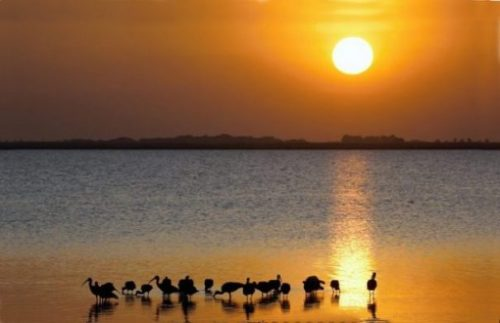Picturesque Landscape Image Of A Beach Sunset/Rise With A Flock Of Ibis In The Foreground.