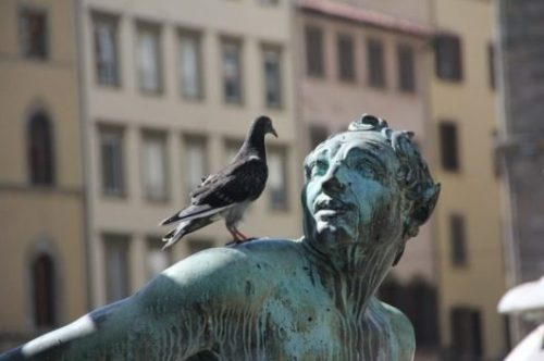 Featured Image Of A Pigeon On A Male Statue Shoulder Staring At The Face.
