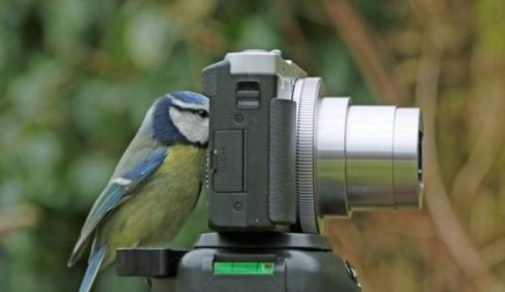 Featured Image Of A Bird Looking Through A Camera Lens.