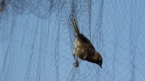 Image Of A Small Bird On A Net.
