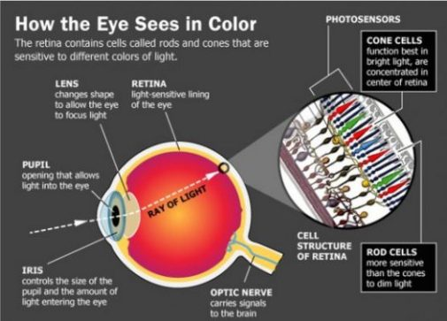 Image Chart Showing How Eyes See Colors.