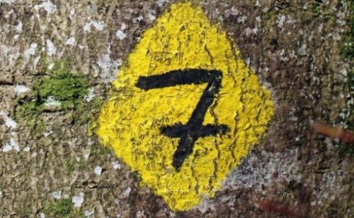 Featured Image Of A European Styled Number Seven In A Bright Yellow Diamond Shape Background Drawn On A Tree Trunk.