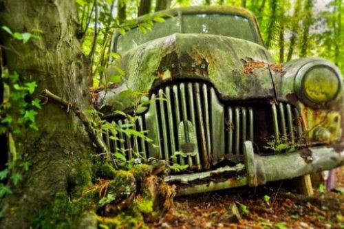 Image Of A Car Wreck Being Overgrown In A Forest.