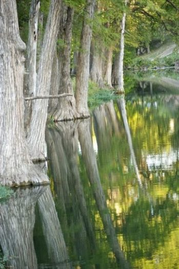 Image Of A Row Of Cypress Trees On A Waters Edge With Partial Reflections Seen In The Waters.