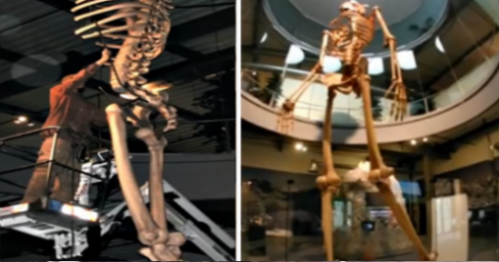 Image Of Giant Skeletons Models Museumed In Ecuador, Switzerland.