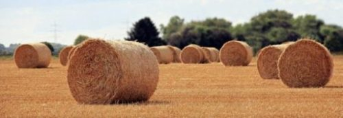 Image Of A Farming Field With Several Hay Roll Bales Scattered Around.