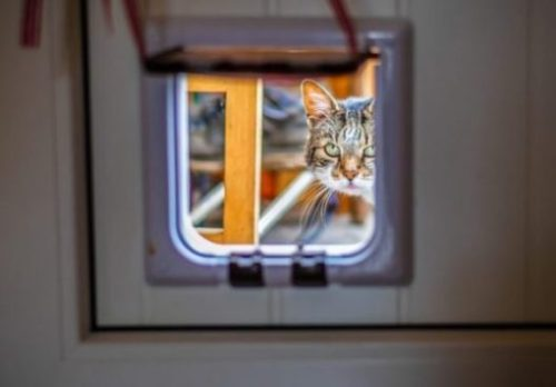 Image Focusing On A Cat Flap Door With A Cat Peering Inside.