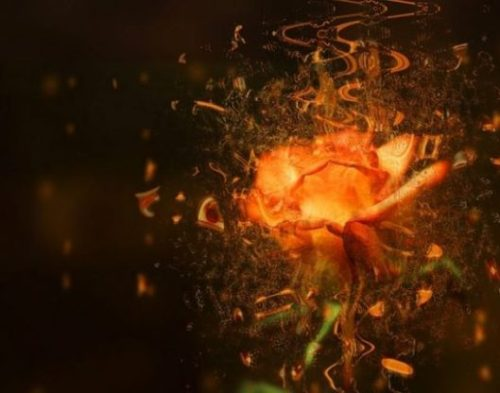 Image Of Fantasy Themed Orangeish Rose And Musical Notes Combined.
